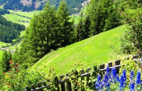 Kofler-Biohof Garten im Sommer